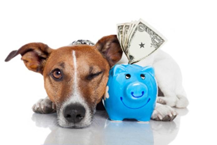 dog-saving-money1